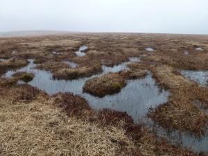 Cranmere Pool Bogs